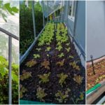 """เปลี่ยนสวนข้างบ้านให้เป็น """"แปลงผักออแกนิค"""" สำหรับเก็บกินเอง หรือปลูกขายเป็นรายได้เสริม"""