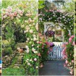 """41 ไอเดีย """"สวนดอกไม้"""" สดชื่น รื่นรมย์ ไปกับพฤกษานานาพันธุ์"""